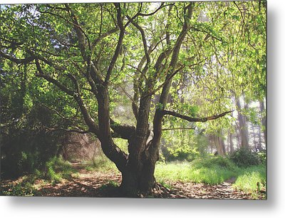 Metal Print featuring the photograph When You Need Shelter by Laurie Search
