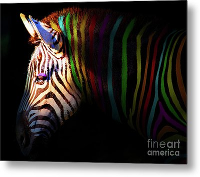 When Zebras Dream 7d8908 Metal Print by Wingsdomain Art and Photography