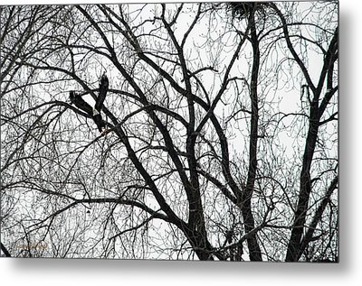 Where Eagles Fly Metal Print by Donna Blackhall