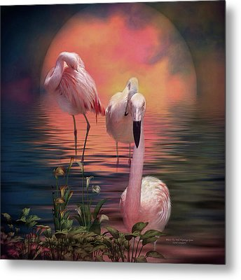 Where The Wild Flamingo Grow Metal Print