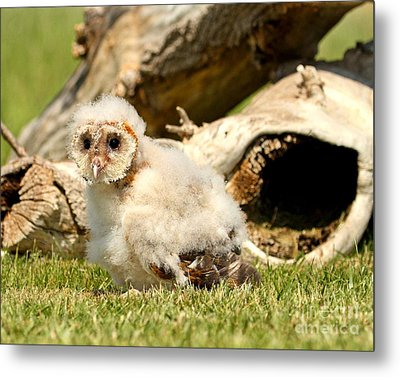 Where's My Mommy Metal Print by Heather King