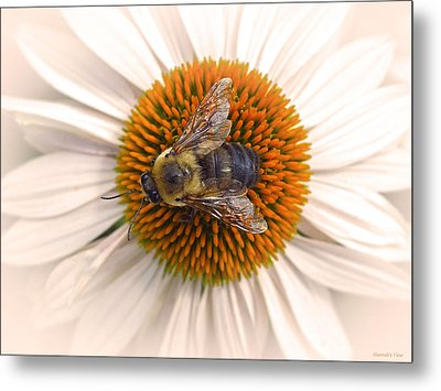 While In Macro  Metal Print