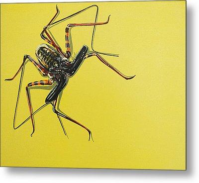 Whip Scorpion Metal Print by Jude Labuszewski