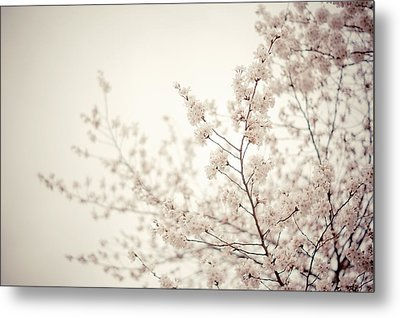 Whisper - Spring Blossoms - Central Park Metal Print by Vivienne Gucwa