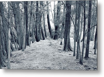 Metal Print featuring the photograph Whispering Forest by Wayne Sherriff
