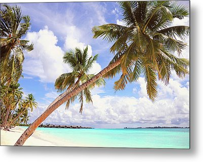 Whispering Palms. Maldives Metal Print