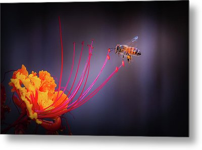 Whispering Wings 1 Metal Print by Mark Dunton
