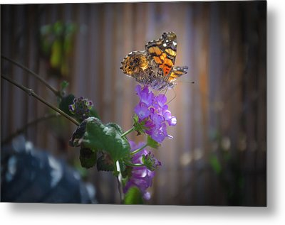 Whispering Wings 2 Metal Print by Mark Dunton