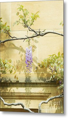 Whispering Wisteria Metal Print by Tim Gainey