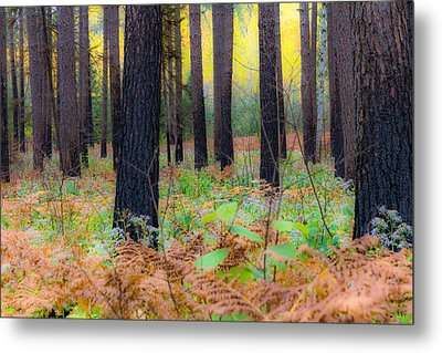 Whispering Woods Metal Print by Mary Amerman