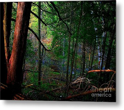 Metal Print featuring the photograph Whisperings by Elfriede Fulda