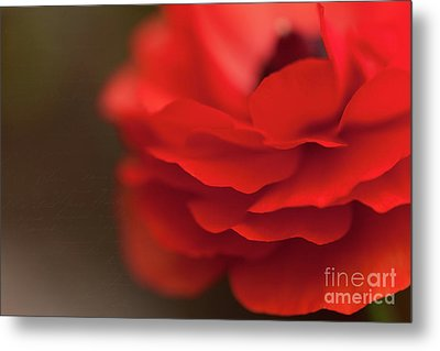 Whispers Of Love Metal Print by Beve Brown-Clark Photography