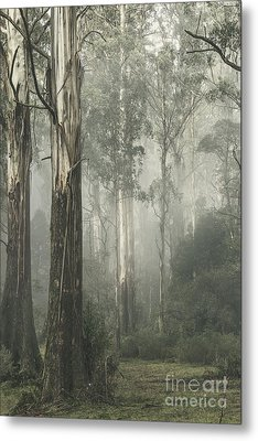 Whist Metal Print by Andrew Paranavitana