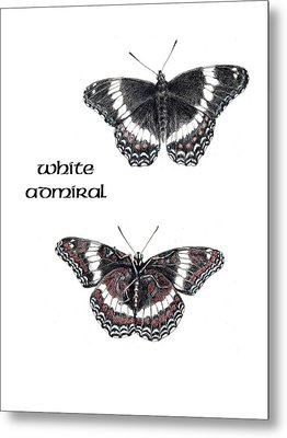 White Admiral Butterfly Metal Print by Betsy Gray