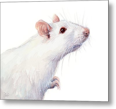 White Albino Rat Watercolor Metal Print by Olga Shvartsur