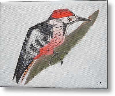 White-backed Woodpecker Metal Print by Tamara Savchenko