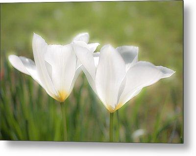 White Blooms Metal Print by Nila Newsom