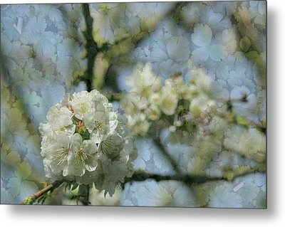 White Blossom Flowers With Leaves Texture Background Metal Print
