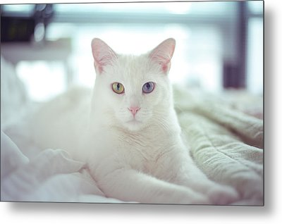 White Cat Laying On Comfy Bed Metal Print by by Dornveek Markkstyrn
