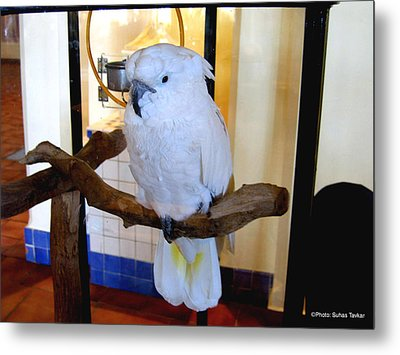 Metal Print featuring the photograph White Cockatoo by Suhas Tavkar