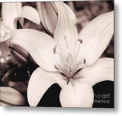 White Day Lily Metal Print by Mindy Sommers