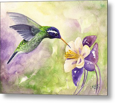 White-eared Hummingbird Metal Print by Art by Carol May