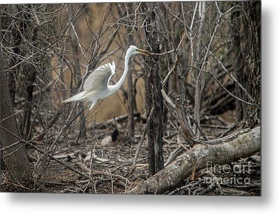 Metal Print featuring the photograph White Egret by David Bearden