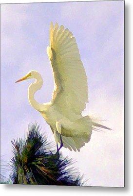 White Egret In Tree Metal Print by Joel Cohen