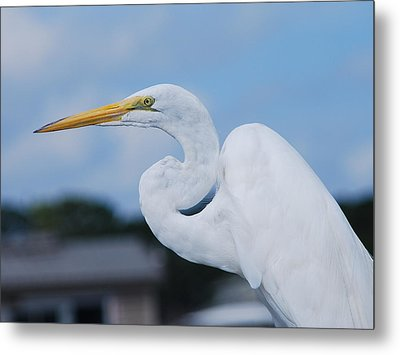 Metal Print featuring the photograph White Egret by Margaret Palmer