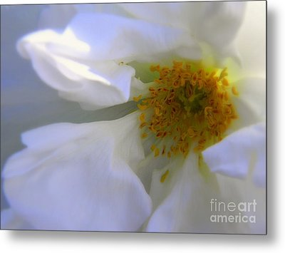 White Metal Print by Elfriede Fulda