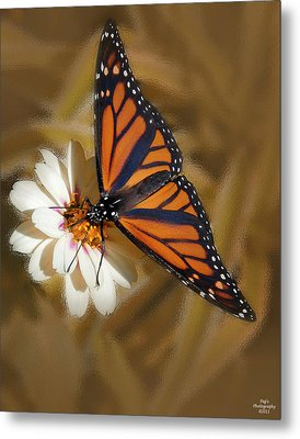 White Flower With Monarch Butterfly Metal Print