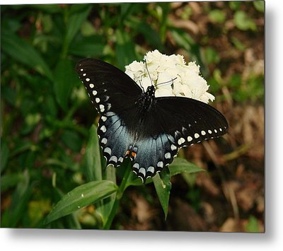 White Flowered Butterfly Metal Print