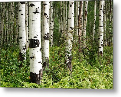 White Forest Metal Print by Eric Foltz