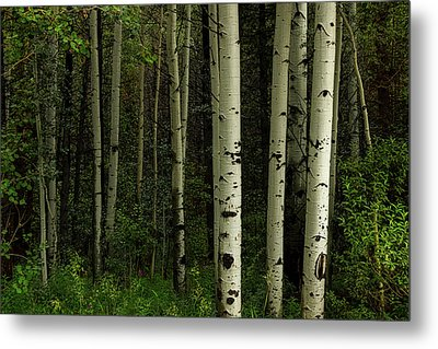 Metal Print featuring the photograph White Forest by James BO Insogna