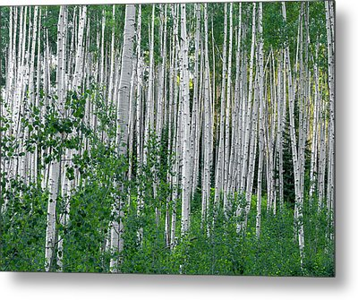 Metal Print featuring the photograph White Forest by Tim Reaves