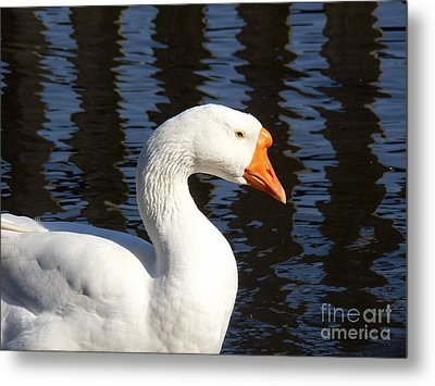Metal Print featuring the photograph White Goose by Elizabeth Fontaine-Barr