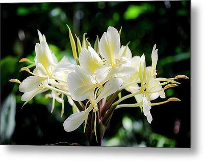 White Hawaiian Flowers Metal Print
