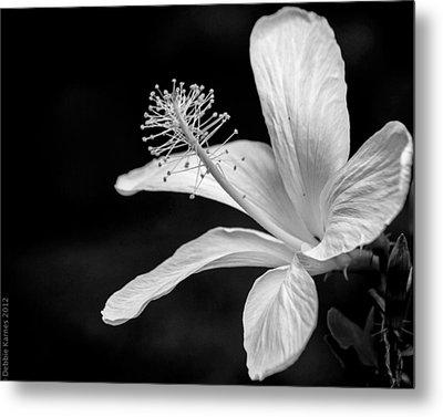White Hibiscus Black And White Metal Print by Debbie Karnes