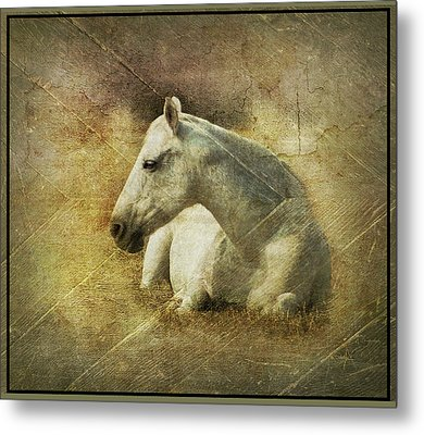 White Horse Art Metal Print