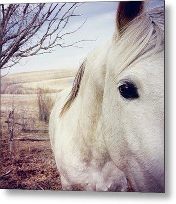 White Horse Close Up Metal Print by Lori Andrews