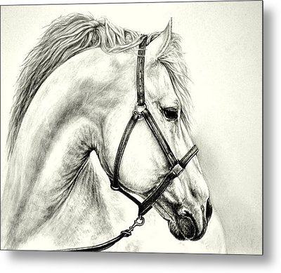 Metal Print featuring the drawing White Horse by Heidi Kriel