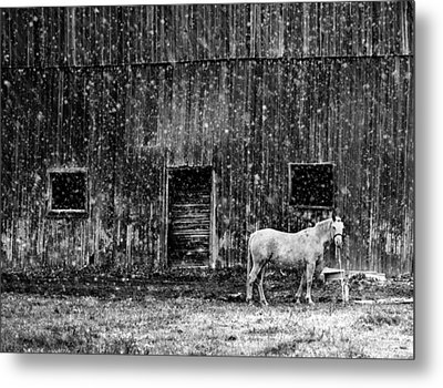 White Horse In A Snowstorm In Bw Metal Print by Maggie Terlecki