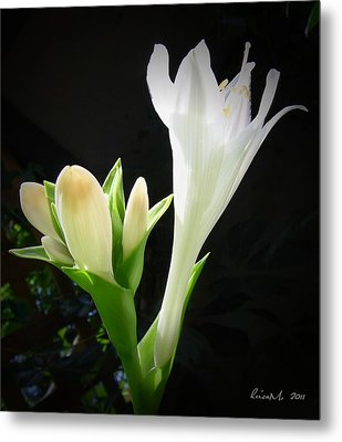 Metal Print featuring the photograph White Hostas Blooming 7 by Maciek Froncisz