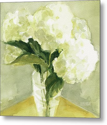 White Hydrangeas Morning Light Metal Print by Beverly Brown