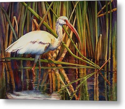 White Ibis Metal Print by Sue Zimmermann