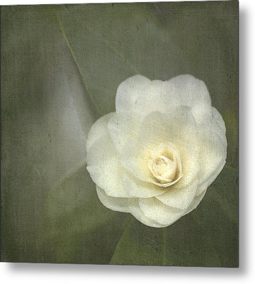 White In The Corner Metal Print by Rebecca Cozart