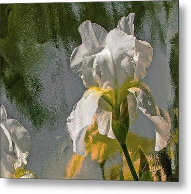 White Iris Metal Print