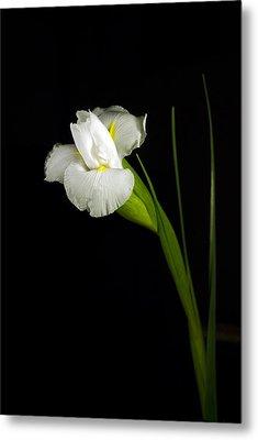 Metal Print featuring the photograph White Iris by Elsa Marie Santoro