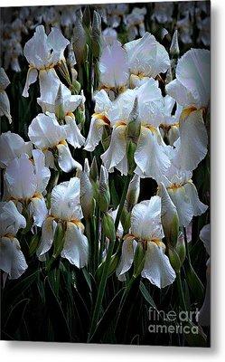 White Iris Garden Metal Print
