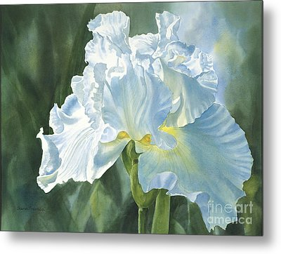 White Iris Metal Print by Sharon Freeman